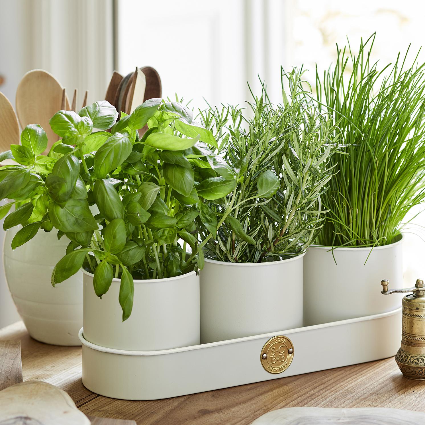 Burgon & Ball – Sophie Conran Buttermilk Herb Pots