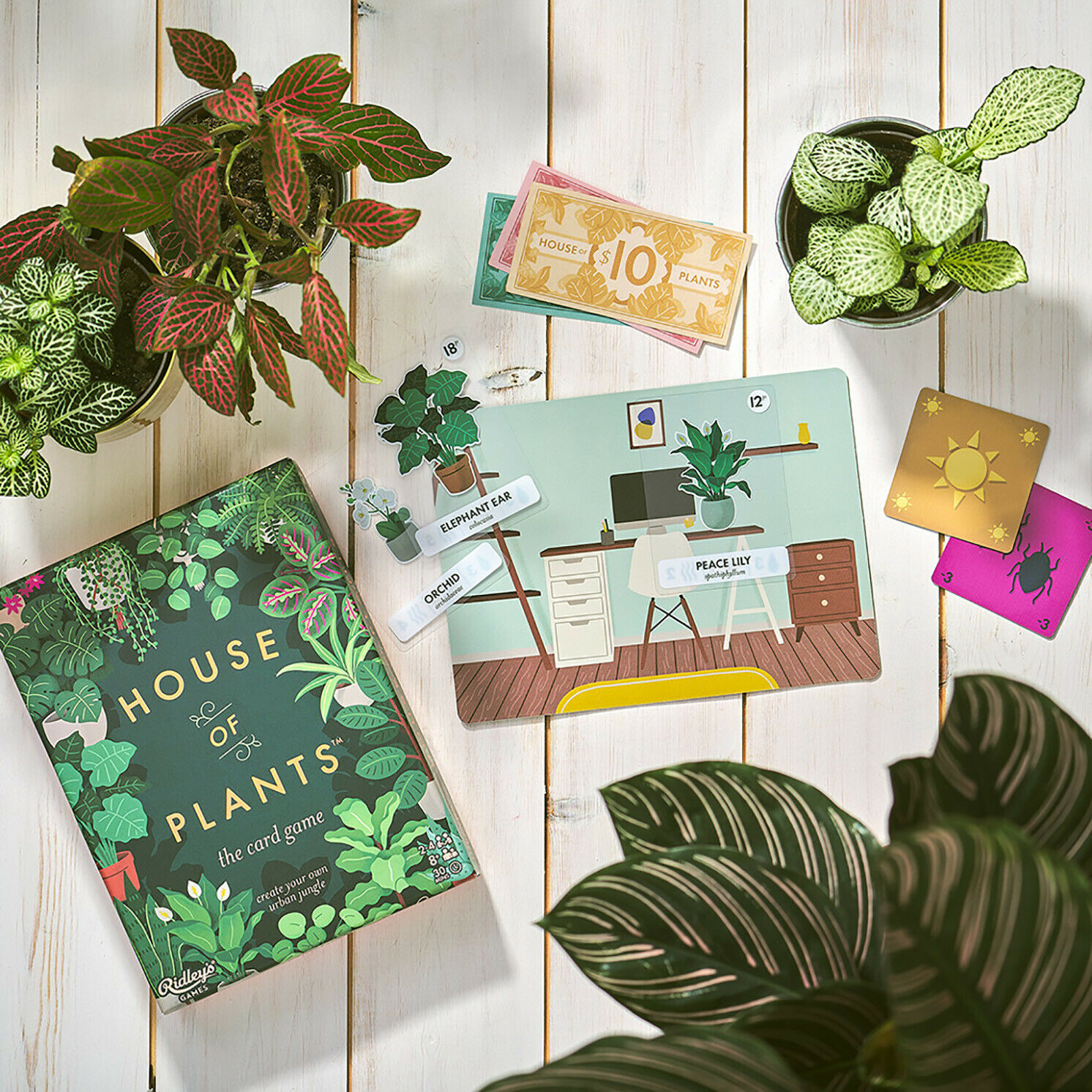 Ridley's Games – House of Plants Card Game in Gift Box